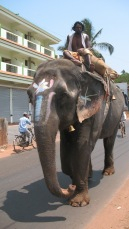 Elephant in Goa 2011