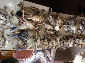 Crabs at the smelly fish markets